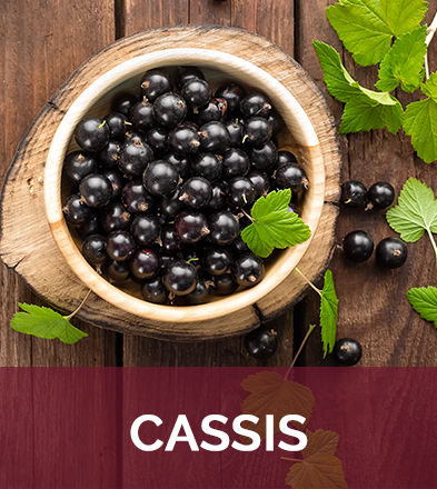Cassis biophenix