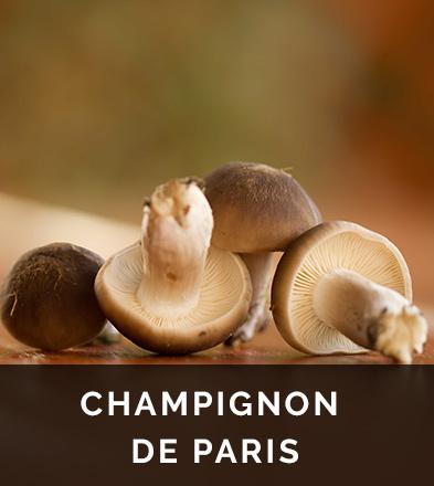 Champignon de Paris, un concentré de nutriments et de sels minéraux