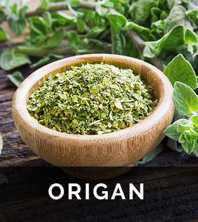 Origan, une plante riche en huiles essentielles aux nombreuses vertus